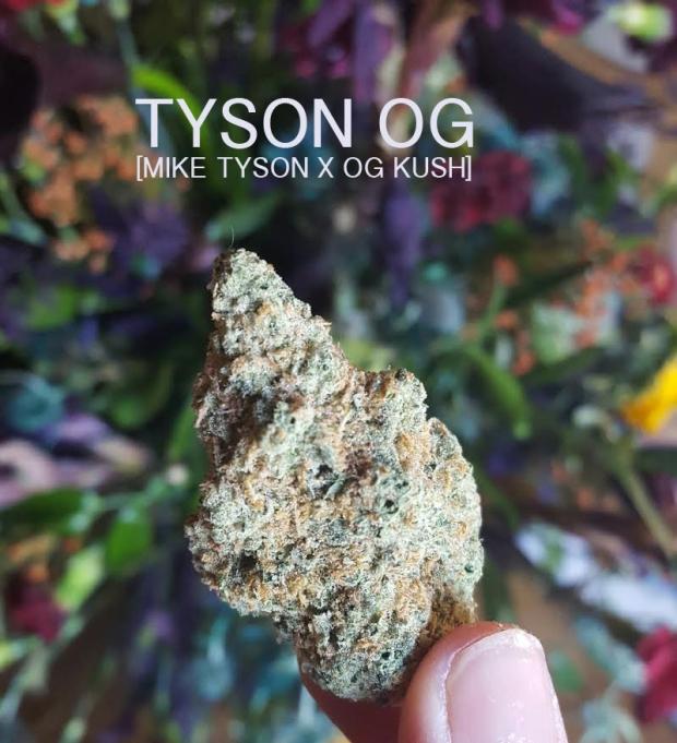 Tyson OG.jpg