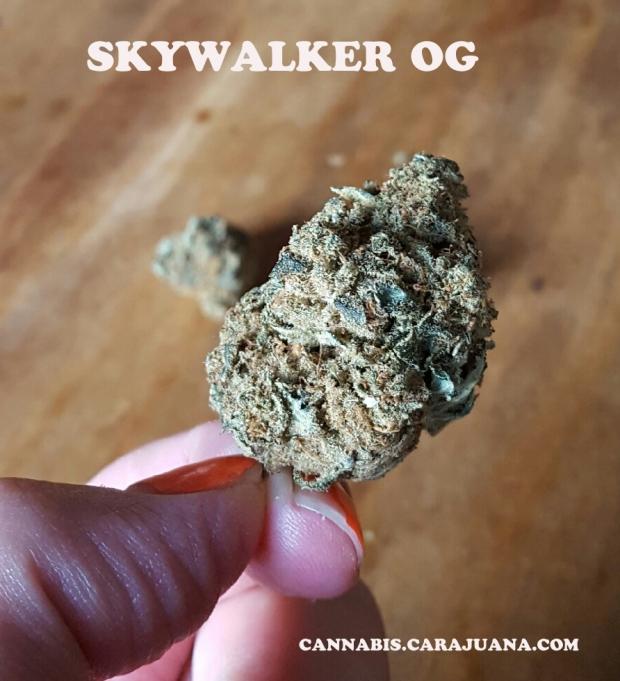 SkywalkerOG2