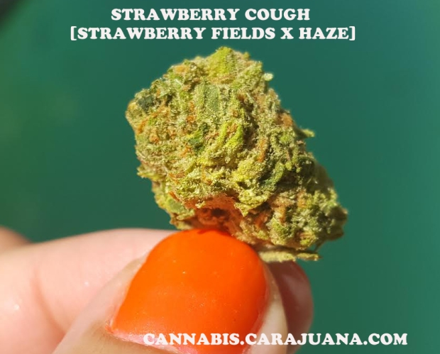 Strawberry Cough 2 copy
